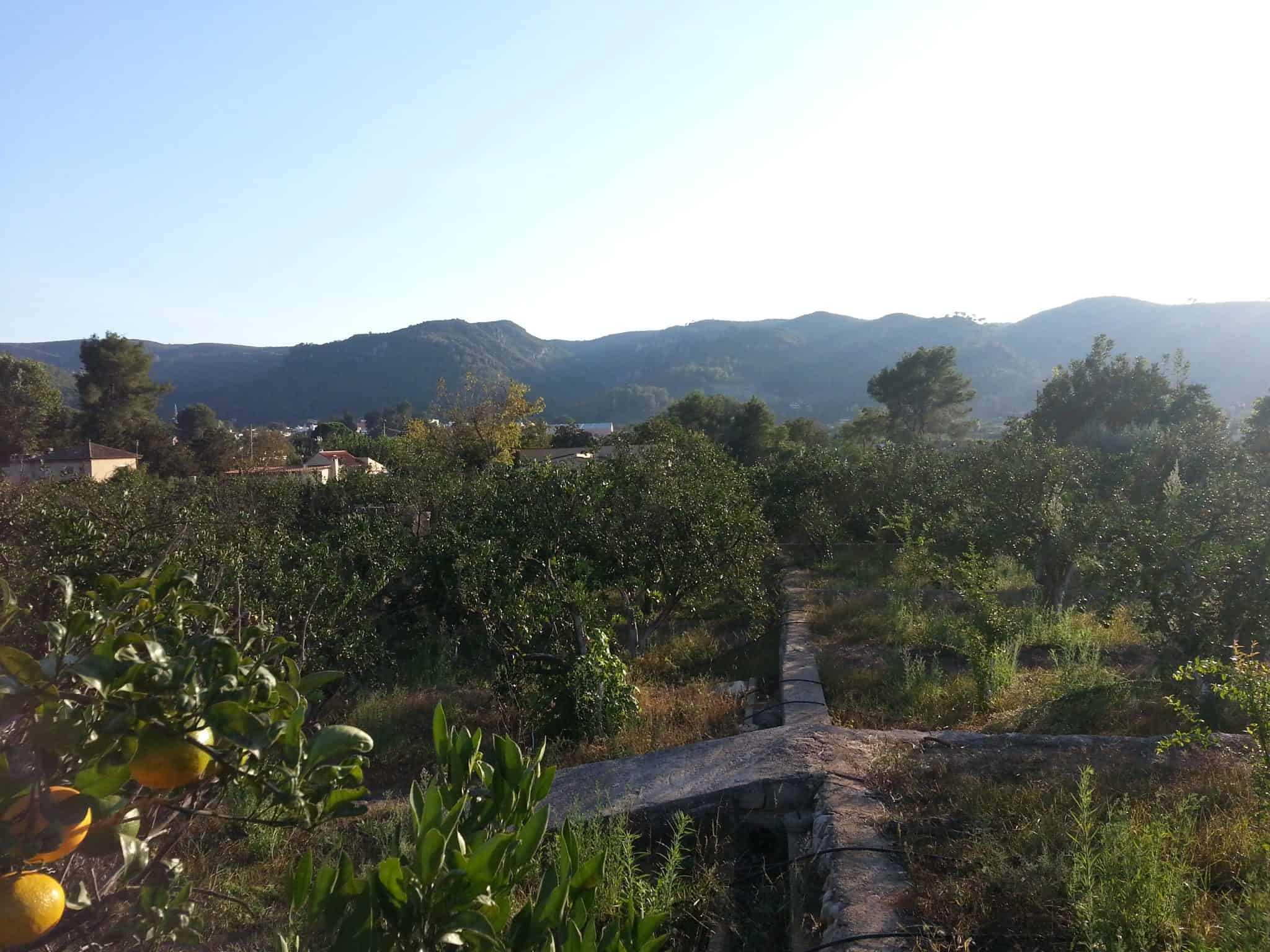 cultivo_ecologico_naranjas_mandarinas